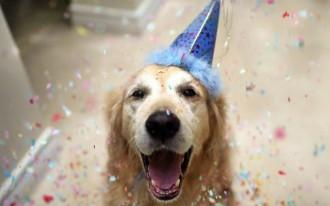 dog-birthday party ideas