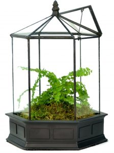 Six Sided Glass Terrarium