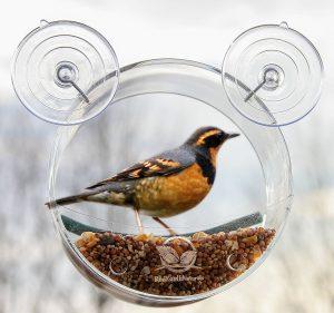 Round Window Bird Feeder