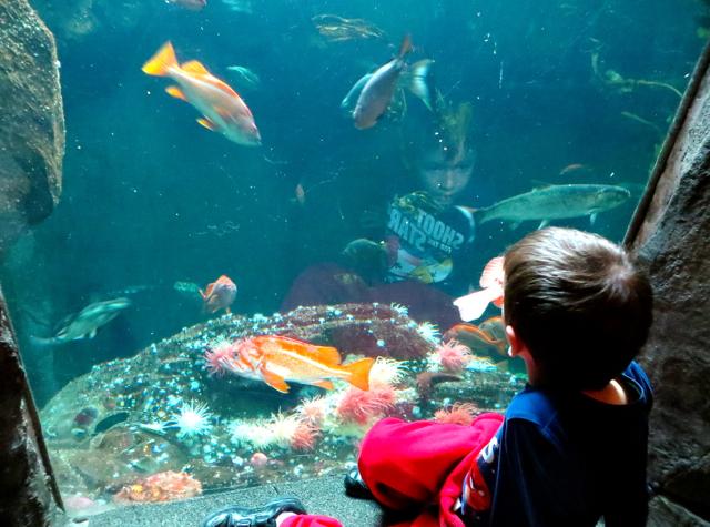 Aquarium lounges