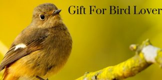 Gift For Bird Lover